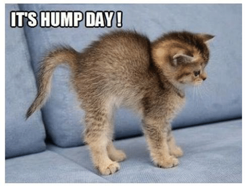 Image result for it's hump day wednesday