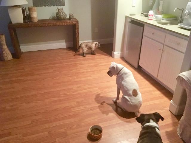 Stella, Lucy, Bailey
