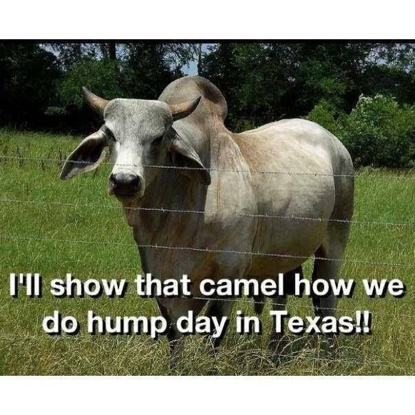 Hump Day in Texas