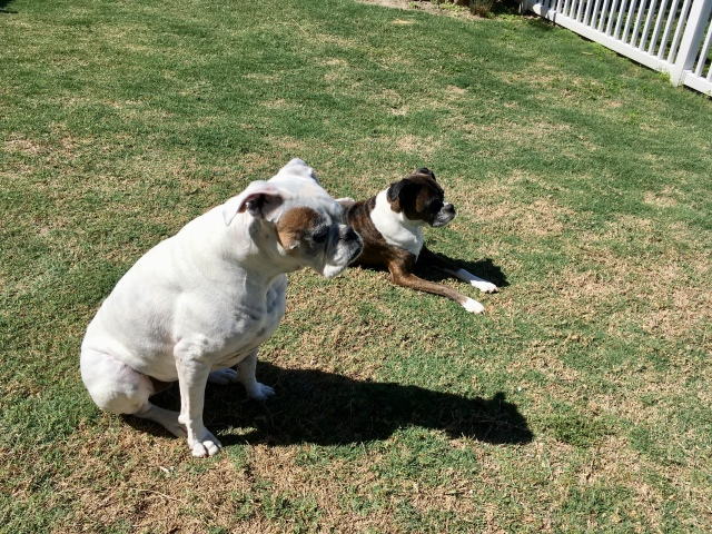 Lucy and Bailey