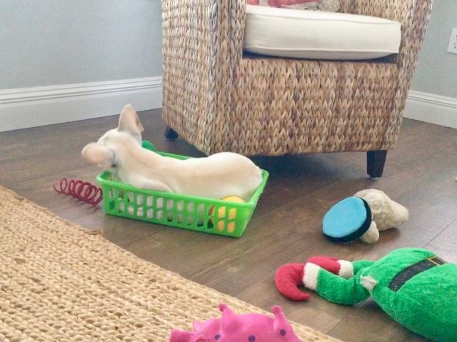 Twiggy's toy basket