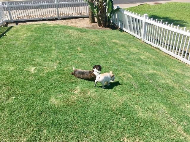 Twiggy and Bailey