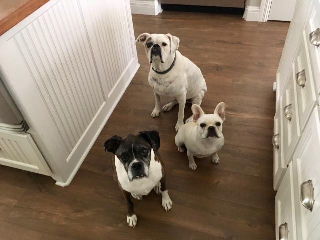 Lucy, Bailey, Twiggy