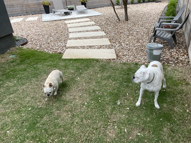 Lucy and Twiggy in the backyard