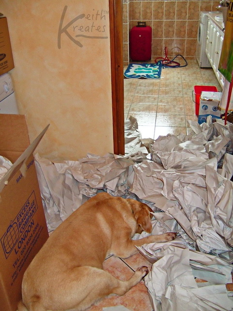 Photo of a dog in paper