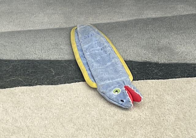 Photo of eel laying the floor