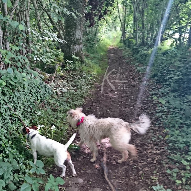 Photo of two dogs in a ravine