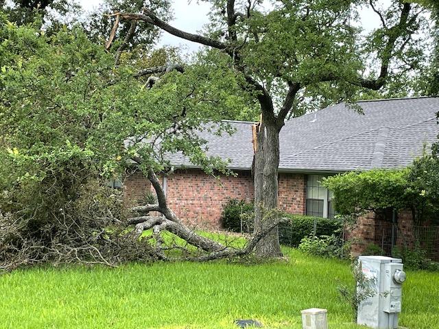 Photo of broken tree limb