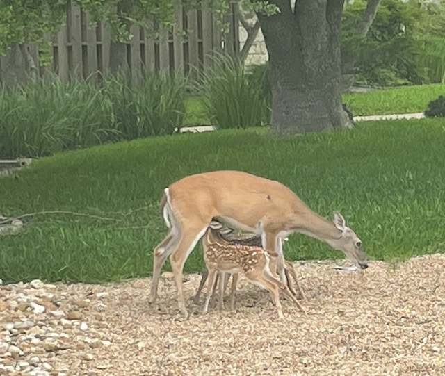 Triplets having lunch