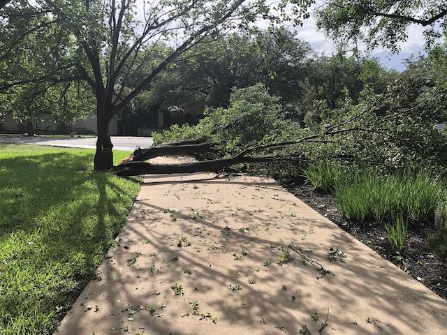 Photo of broken tree