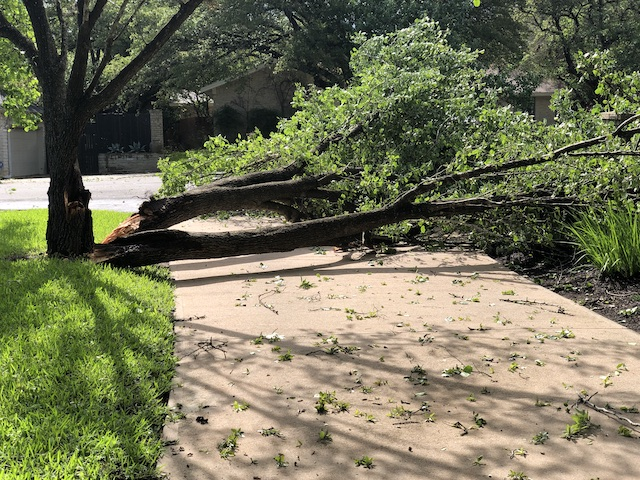 Photo of a downed tree
